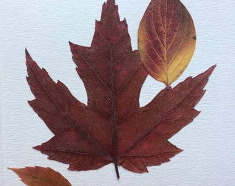 Pressed Maple Leafs Card, Pressed Autumn Leafs, Dried Pressed Leafs, Pressed Plants Card