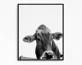 Milk cow poster. Cow photography. Nature poster. Nature photography. Cattle photography. Bull printable poster. Instant download