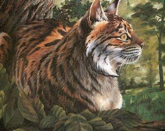 Pardel   [Lynx pardina)