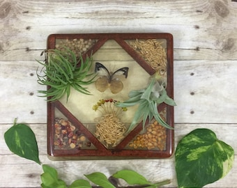 Butterfly Taxidermy and Dried Flower and Grain Resin Trivet Hot Plate - Vintage Boho Home Decor
