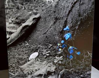 Ostara - Spring Equinox - Pagan - Greeting Card