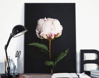 Peonies print, pink peonies, flower photography, Botanical print, plant print, nature photography, floral photography, peonies photo, black