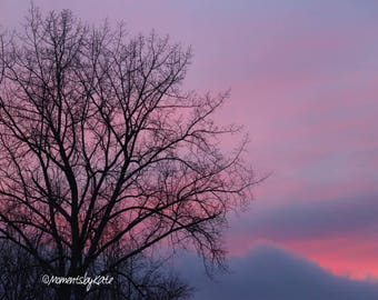 Leafless Tree with Pink Sky Photo Print
