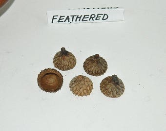 Natural Acorn Caps - Feathered Acorn Caps - Crafting Supplies - Fairy House Roof - Bird House - Rustic Decor - Arts and Crafts - Potpourri