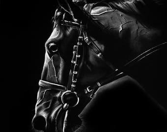 Horse painting, pastel painting, Black and White, SvetnikArt
