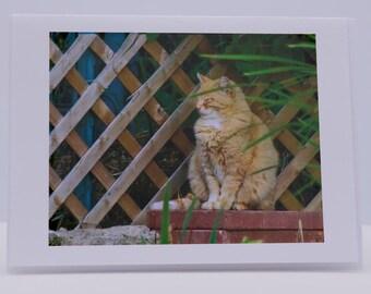 Blank Greeting Card: Frannie Kitty