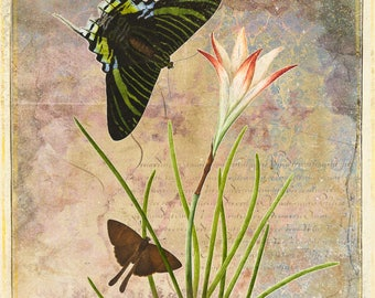 Two butterflies and flower