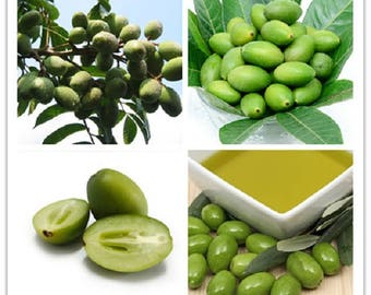 5 Organic Fresh seeds Olive Olea Europaea Fresh and delicious kitchen concoction