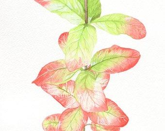 Watercolour Plant Painting - Original, A4