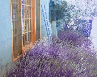 Lavender in New Mexico