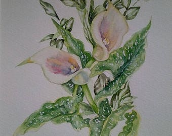 Calla Lillies, garden flower, delicate shades, white mount 14 x 11, valentines day, mothers day gift, gift ideas, affordable art, fine art