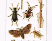 Insect Collector Stickers Dragonfly Stickbug and Beetles