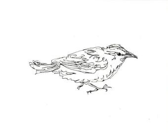 Sketchbook Sale - Bird #15 Original Ink Line Drawing - 8x10 Songbird Original Art