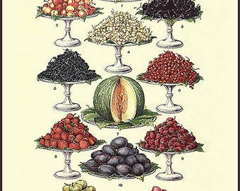 Vintage Fruit Platters Poster - vintage lithograph repro ~ Kitchen art ~ fruit chart ~ vintage kitchen art ~ cooking poster ~ Giclee Print