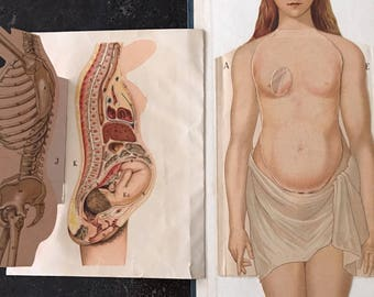 Dr. Minders Anatomical Manikin of the Female Body Book Early 1900s Female Anatomy Medical Book Oddities