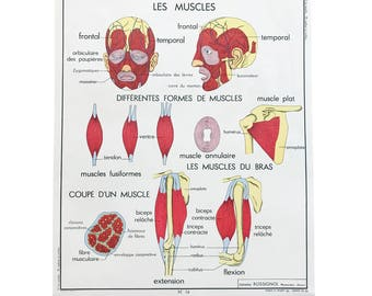 Vintage Authentic French Educational Double-Sided School Poster Chart - Muscles / Spine / Skeletal Hygiene