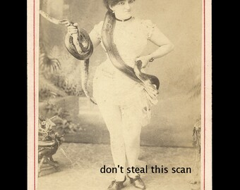 Great Victorian Era Cabinet Card of a Woman Holding Two Huge Snakes