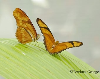 Two Butterflies Photography, WIldlife Photography, Nature Photography, Yellow, White Flowers, Spring Photography, Butterfly