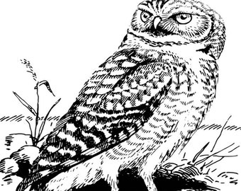 Animal Coloring Page Item 5 Owl, Printable Coloring Page, Instant Download Adult Coloring Page.