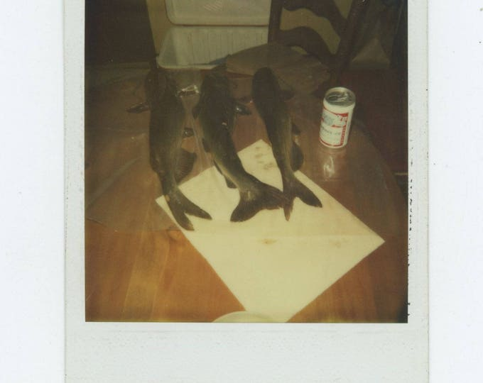 Vintage Polaroid SX-70 Snapshot Photo: Day's Catch [81638]