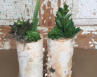 "8"" Birch Pillar with Artificial Succulents"