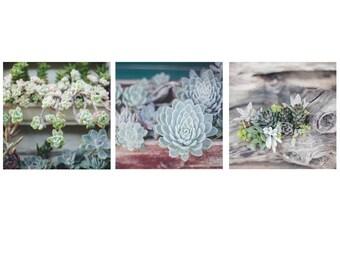 Succulent Wall Art - Set of 3 - Oversize Wall Art, Big Wall Art, Succulent Wall Art, Sage Green Prints, Boho Prints, Nature Photography