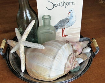 Vintage Seashore Vignette Complete Display with Hand-painted Seagull