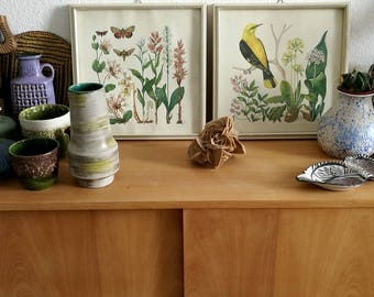 set, vintage prints, lithography, two, bird, butterfly, nature,flowers, midcentury, decoration, homedecor, frame, gallery wall, vintage