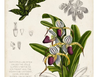 Orchid Field Notes I