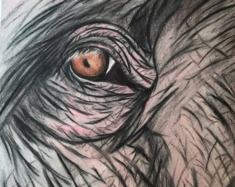Elephant eye colored pencil drawing