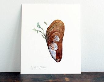 Original Watercolor Ribbed Mussel with Seaweed Painting, beach seashore art