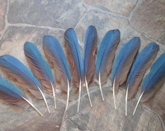 Macaw Wing Feathers Rounds for 2