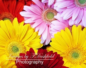 Daisies, Flowers, Nature Photography, Fine Art Print, Macro Photography, Fine Art Photography
