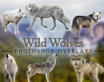 Wild Wolves Wolf Animal Outdoor Overlays for Photographers, Clip Art, Scrapbook, High Quality Images Howling Wild Animals