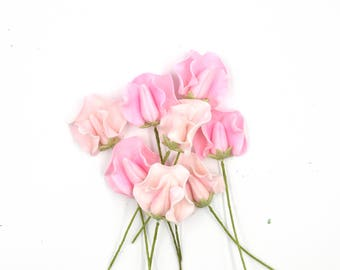 Pink Sweet Pea Sugar Flowers set of 8