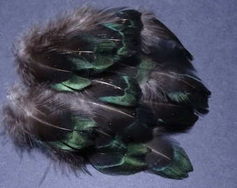 Set of 20 small pheasant melarictic fluff feathers