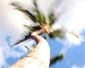 Palm Tree - Stock Photography, Digital Download, Photograph, Nature