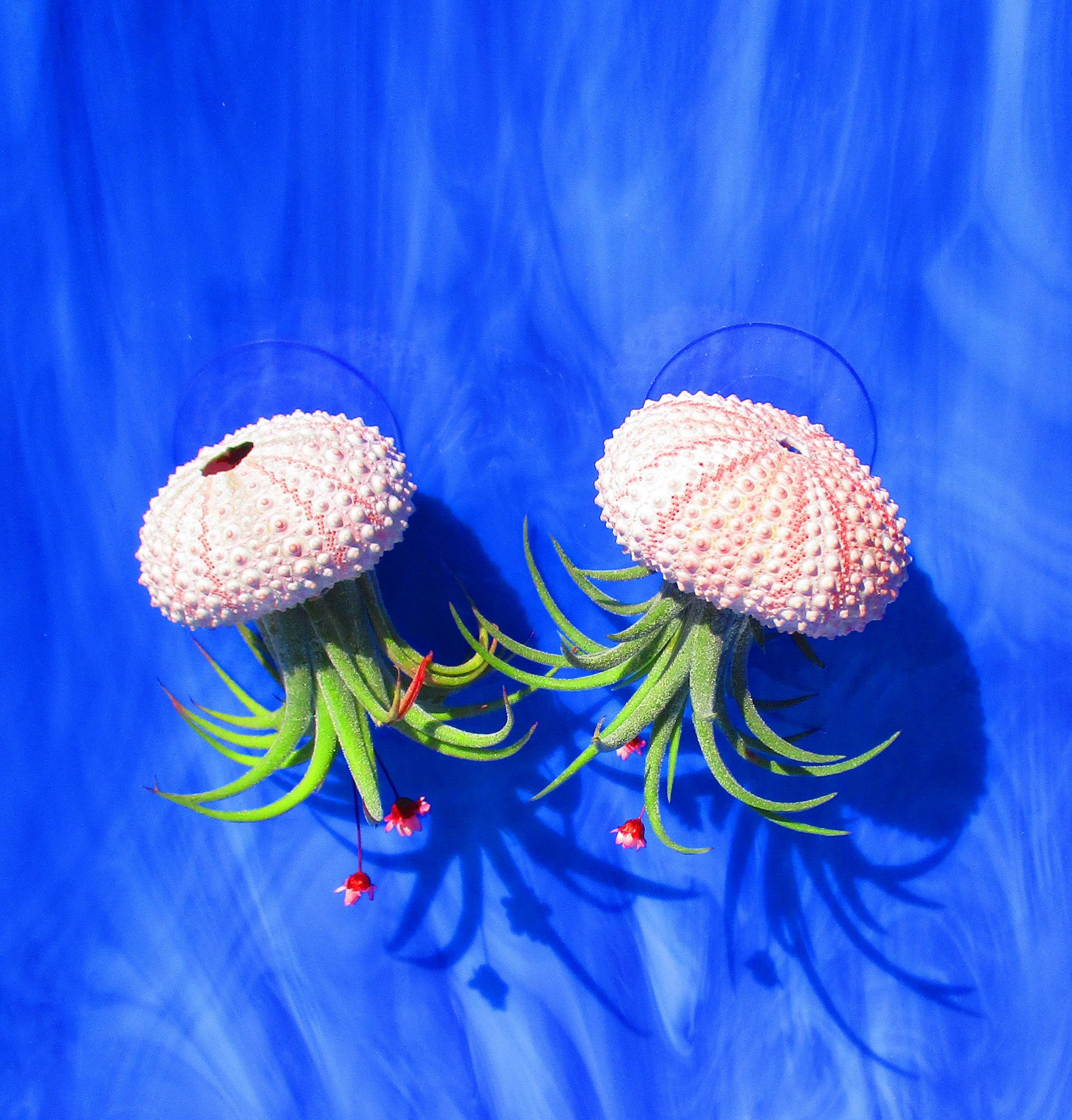 Jellyfish Air Plant Holders 4 Pack: Air Plant, Sea Urchin Jellyfish, Air Plant Holder, Wall
