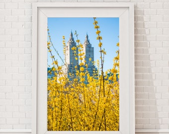 central park spring, yellow central park, floral photography, nyc photographer