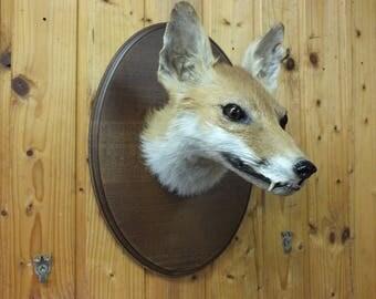 Fox head taxidermy * head * trophy * decor * antique * animal