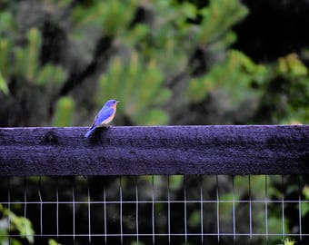STUNNING BLUEBIRD PHOTOS