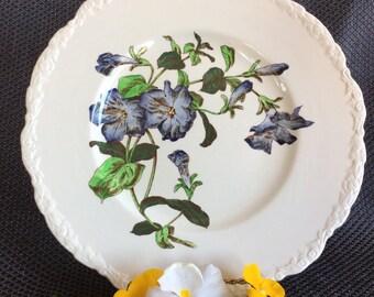 Vintage Cauldon dinner plate ceramic botanical flower serie no 4 ironstone