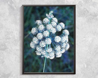 Wild flower Nature Photography, Flower Photo Prints, Flower Digital Art, Botanical Art, White Wild Flower, Botanical Art Work, Home Decor