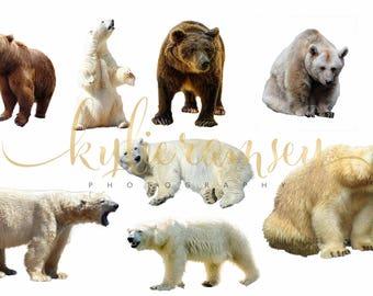 Bear overlay, polarbear overlay, PNG File, digital image, digital overlay, digital background,