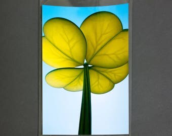 "Fine Art Photography ""Lucky Clover"" Archival Print"
