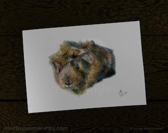 Guinea Pig Print. Watercolour pencil drawing, guineapig art, guinea pig portrait drawing