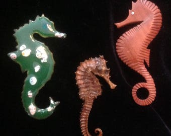 Vintage Lot of 3 Seahorse Pin Brooch Green Enamel Wood Natural From The Ocean