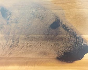 Polar Bear Cedar Wood Print