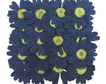 Pressed flowers, navy marguerite 20pcs for floral art craft card making scrapbooking