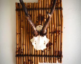 Roe Deer w Bamboo Board